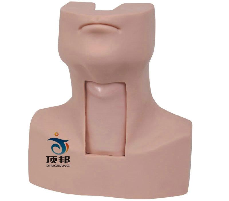 高级环甲膜穿刺及气管切开插管训练模型