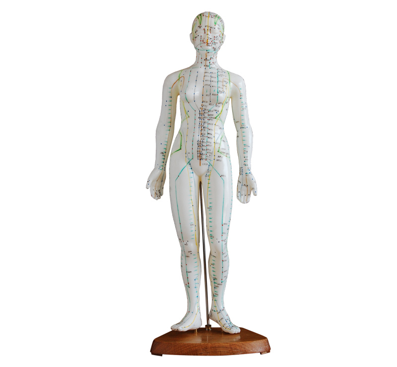 人体针灸模型48CM
