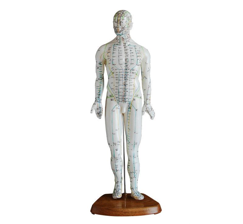 人体针灸模型46CM