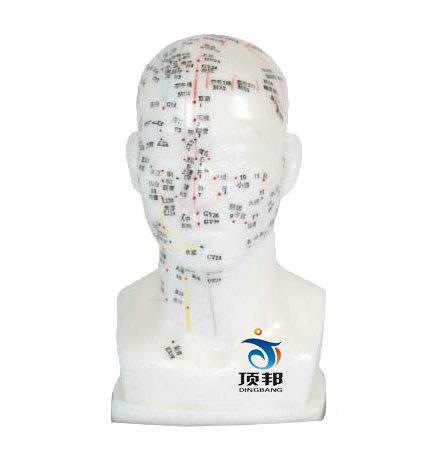 头针灸模型20CM