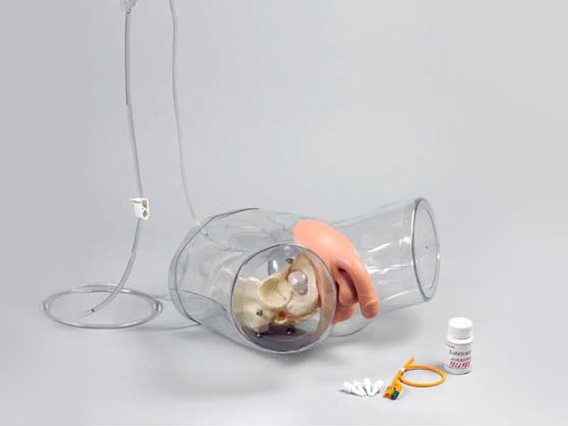 透明男性导尿模型